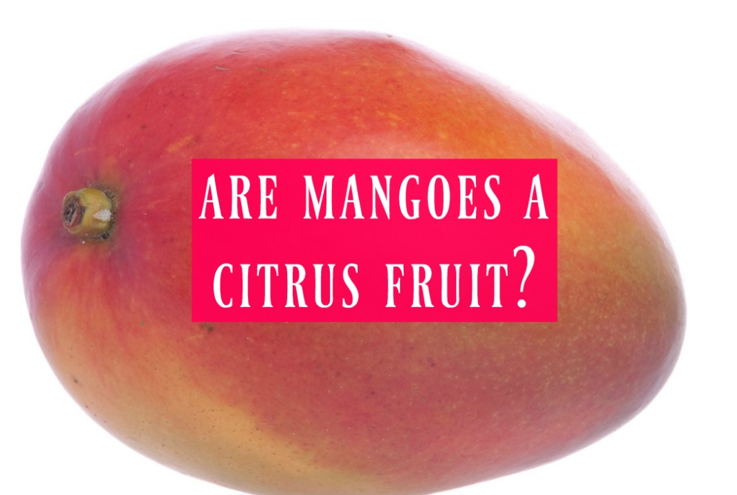 are mangoes a citrus fruit